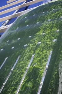 Algae GRRE Invest